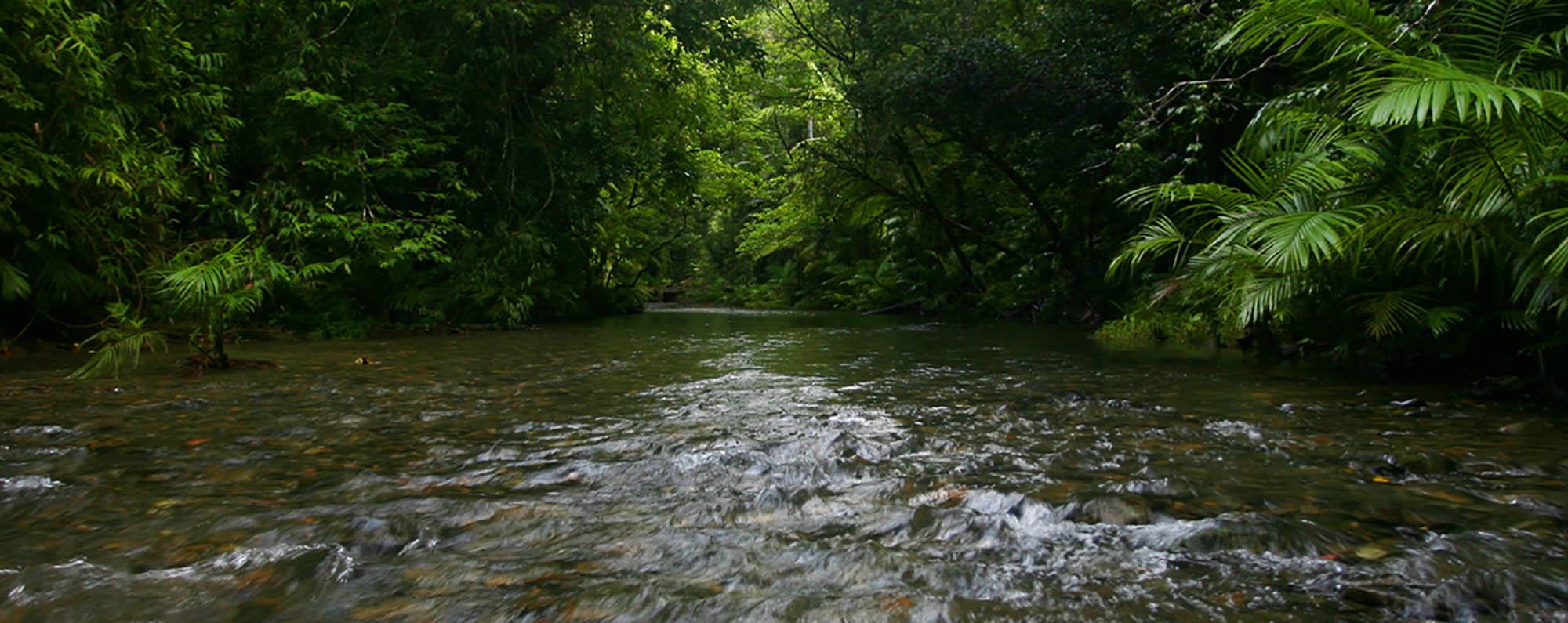 Daintree Rainforest Foundation Ltd Constitution