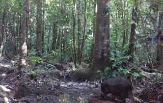 Daintree Rainforest Foundation Ltd