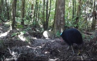 Camera Traps - August 2020