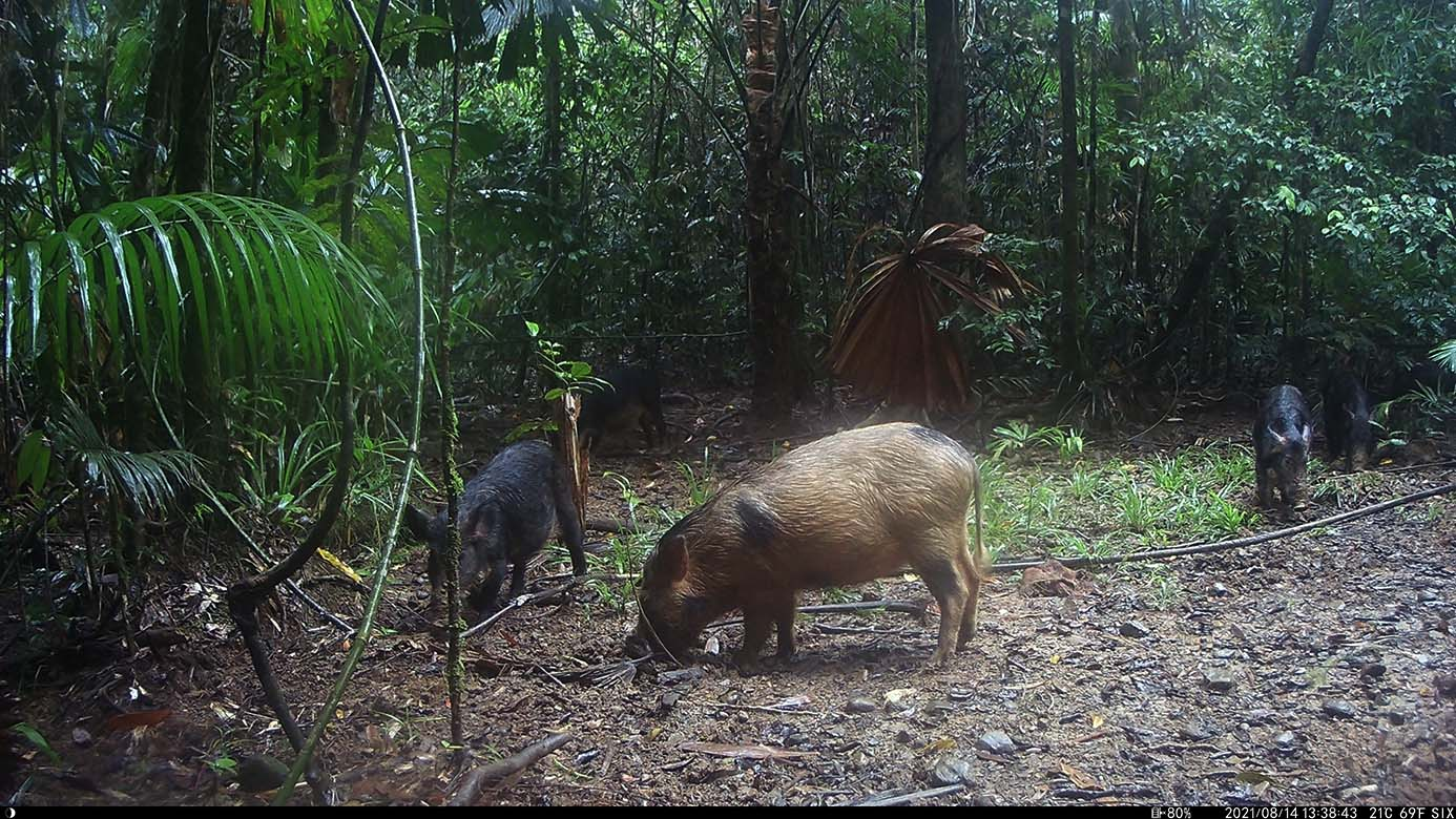 Camera Traps - August 2021